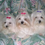 """Demi, Noel, Mia"" (Demi & Mia have crossed over The Rainbow Bridge)"